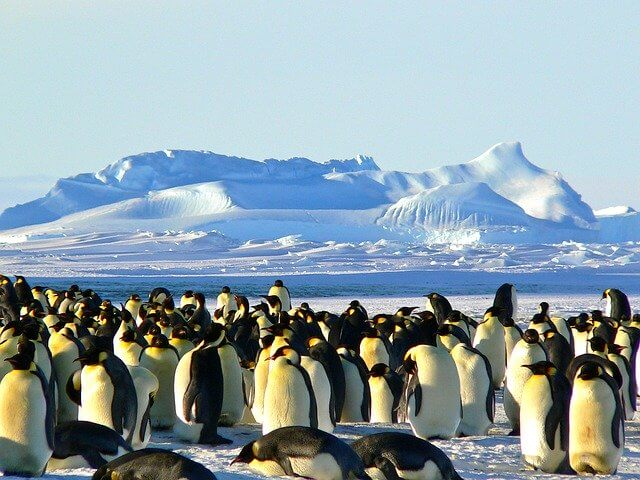 Emporor penguins on Antartica